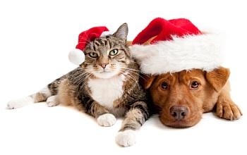 Xmas Cat and Dog